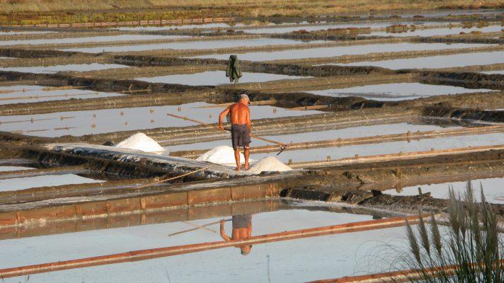 Artisanal salt production in Cale do Oiro saltpans (Aveiro municipality, Ria de Aveiro region)
