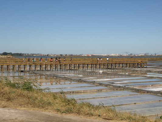 Birdwatching activity with students during Summer Academy (Santiago da Fonte saltpans - owned by the University of Aveiro, Aveiro municipality, Ria de Aveiro region)