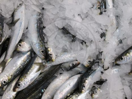 Anchovies, kavala fish market, Greece
