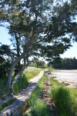 B1 - Coastal path at Saint-Pierre - Locmariaquer (Gulf of Morbihan, Brittany) - Sybill HENRY
