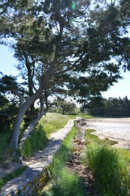 B1 - Coastal path at Saint-Pierre - Locmariaquer (Gulf of Morbihan, Brittany) - Sybill HENRY