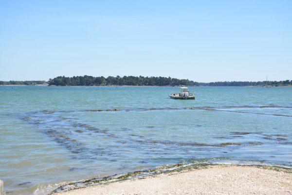 B1 - Oyster parks - Locmariaquer (Gulf of Morbihan, Brittany) - Sybill HENRY