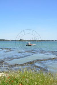 B1 - Oyster parks and plate (boat) - Locmariaquer (Gulf of Morbihan, Brittany) - Sybill HENRY
