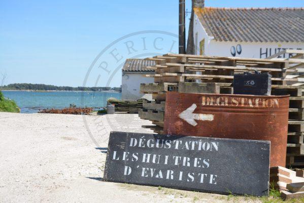 B1 - Oyster tasting - Locmariaquer (Gulf of Morbihan, Brittany) - Sybill HENRY