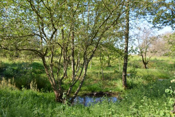B1 - Wetland area - Locmariaquer (Gulf of Morbihan, Brittany) - Sybill HENRY