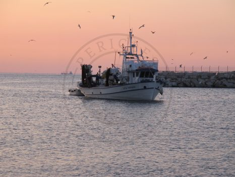Kavala, fishing boat brings the catch to the fish auction house, Greece