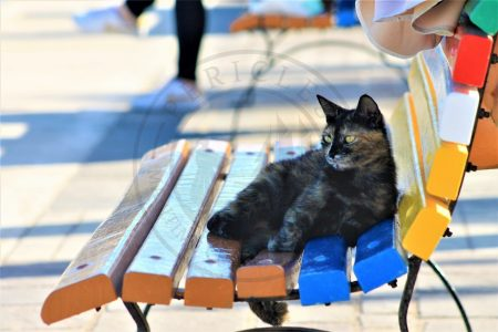 "Marsaxlokk, Malta. A fisherman's cat is enjoying the brand new painted bench with the traditional ""Luzzu colors"" at the waterfront of Marsaxlokk (Photo: Jordi Vegas Macias)."